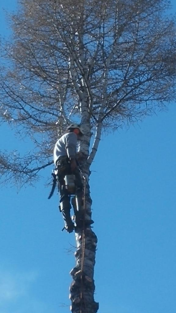 Tree trimming in the Denver metro area