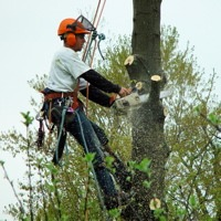 Tree removal in progress in the Denver area.