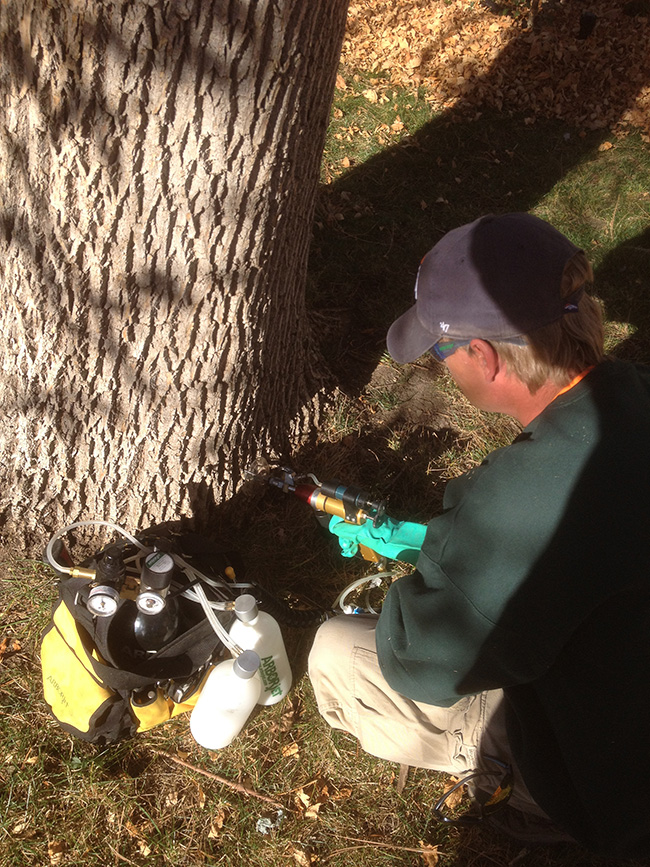 Tree injections in Denver, CO
