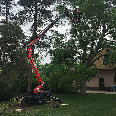 Tree Trimming Services In Denver Co Schulhoff Tree