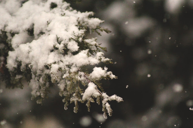 How to Help Trees Before, During, and After Heavy Snowfall