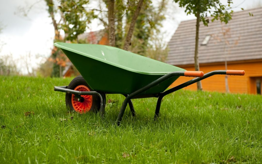 Spring and Your Lawn: Tips for Bringing Back Your Grass