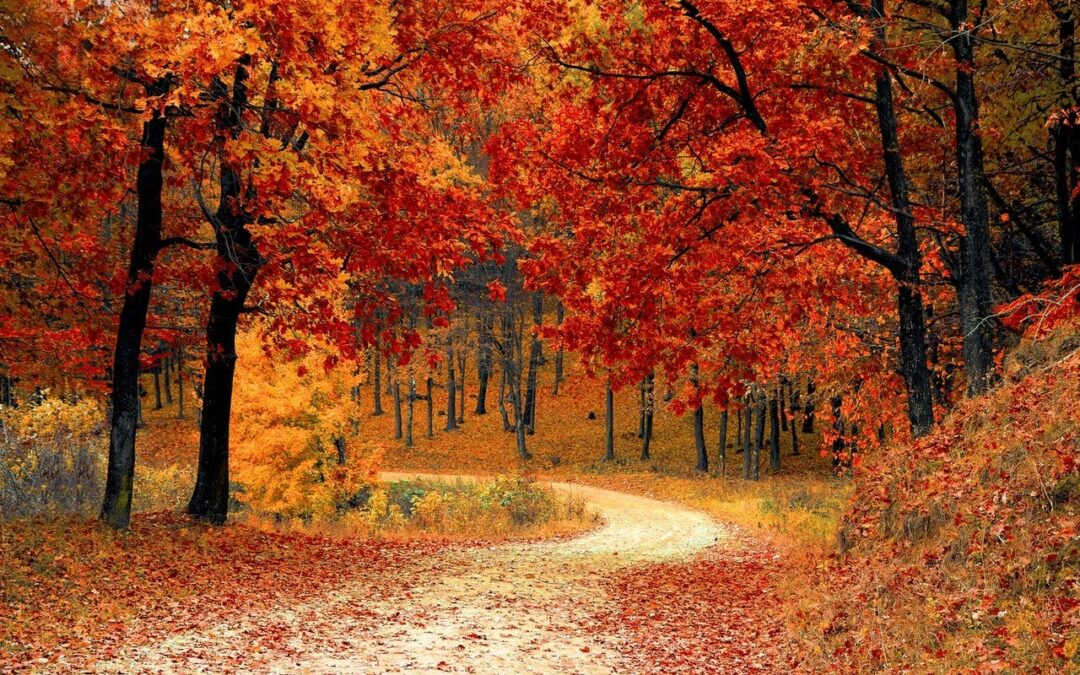 Fall Activities That Could Impact the Health of Your Trees